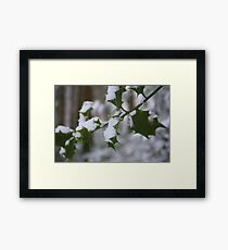 Snowy Holly Framed Print