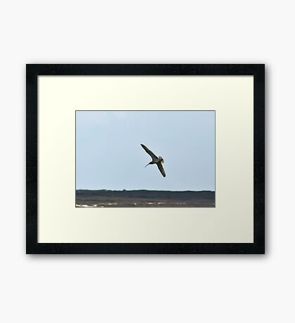 Curlew above the Moors Framed Print