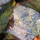 Autumn Rain by Nadya Johnson