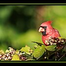 MR. RED by BOLLA67
