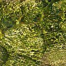Green Water Ripple Reflection by Jeanne Kramer-Smyth