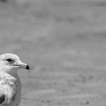 Ontario bird by sophiephoto