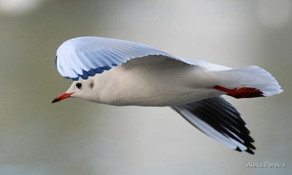 Flying Free by Alexa Pereira