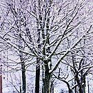 Winter Blues by inkedsandra