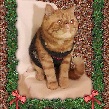 Bimbo - first Christmas with us by Rori