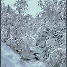 Into White, New Snow on Halls Brook, Groton, NH by Wayne King