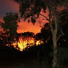 Chilli Creek at Sunset- The Kimberley by deboraharmour