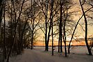 Morning Walk in Wonderland by AnnieSnel