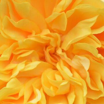 Roxies Rose by lizdomett