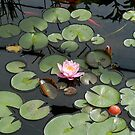 Pink Lilly by Corkle