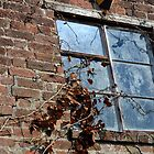 Window in an Abandoned Cottage. by Billlee