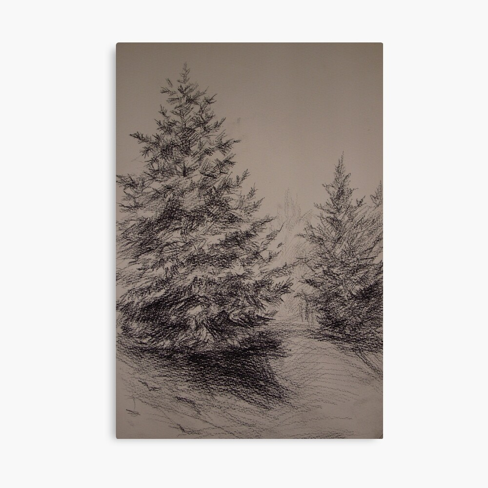 Two Spruces Canvas Print