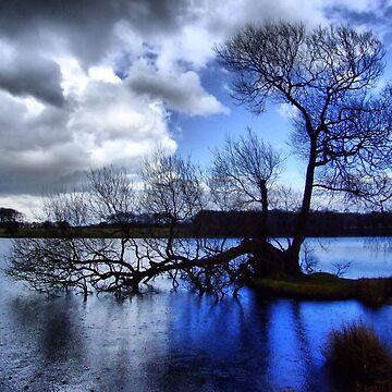 Blue Rain by spottydog06
