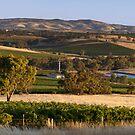 Hentley Farm Panorama by Paul Thompson
