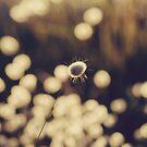 All alone by Hayleyschreiber