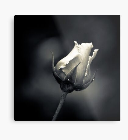 Acromatic Rose Metal Print