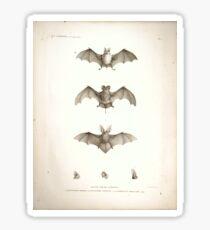 Bats of Egypt Vintage Drawings Sticker