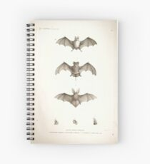 Bats of Egypt Vintage Drawings Spiral Notebook