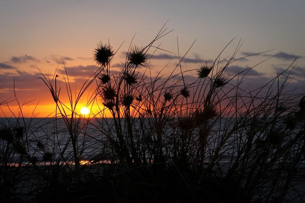 sunset grass by Martin Pot