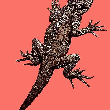 Agama Lizard on 'Living Coral' - Pantone's Colour of 2019 by AmandaMLucas