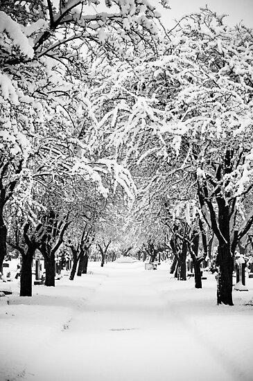 Deep Snow by eyeshoot