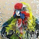 """""""Australian Rosella Bathing"""" by Skye Elizabeth  Tranter"""