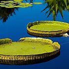 Lily pads at Denver Botanic Gardens by Thaddeus Zajdowicz