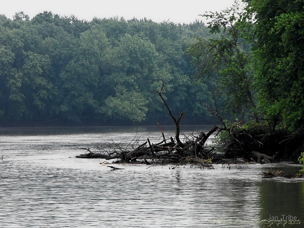 Drift wood along the Shore of the Mississippi by Jan  Tribe