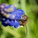 Honey Bee by D-GaP