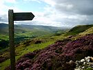 fremington edge signpost in swaledale by Mat Robinson