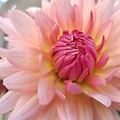 Sunlit Pink Flower by Jeanne Kramer-Smyth
