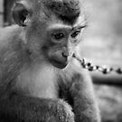 waiting monkey (black & white) by Martin Pot