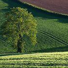 Lone tree in Mid Devon by peteton