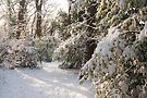 Snowy Dulwich Woods: South London. UK. by DonDavisUK