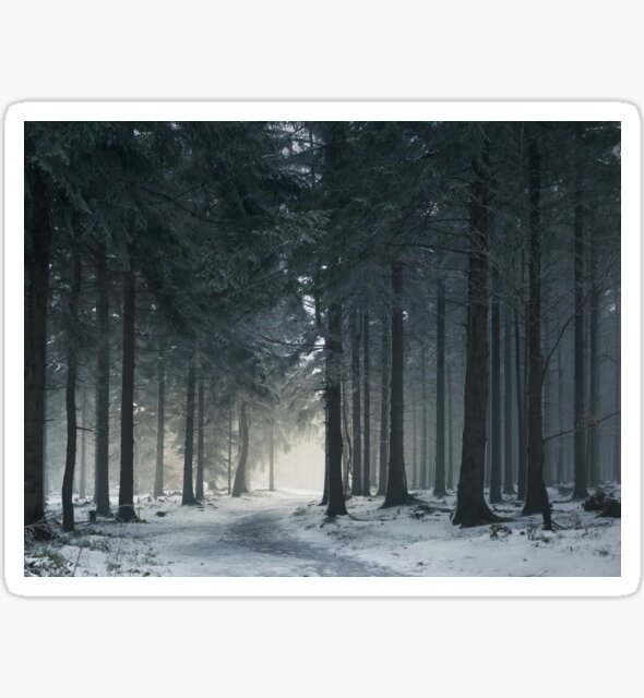 Misty Winter Forest | Woods on Mountain in Fog by Thubakabra
