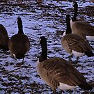 Follow the Leader by KChisnall
