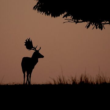 Stag at sunrise by Mortimer123