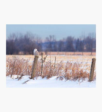 A snowy owl landscape Photographic Print