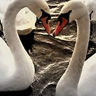 Swan Love by KChisnall