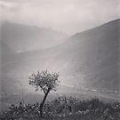 Little Tree in Cali. by Paula Betz