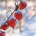 Winter Cherry in a Row by denis-romanov