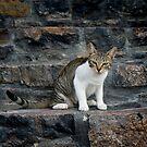 Katze  von laura-S