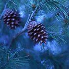 Pine Tree & Pine Cones by imaginethis