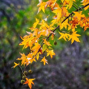 Colored foliage by birba