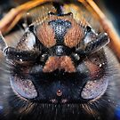 Wasp Study 2 by Marloag