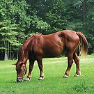 Horse Grazing in Field by Susan Savad