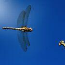 Dragonfly Inflight by FraserJ
