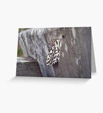 Black and White Tiger Moth (Spilosoma glatignyi) Greeting Card