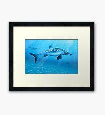 Ophthalmosaurus - Extinct Marine Reptile Framed Print
