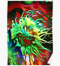 4479 Anemone Poster